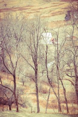 Mystical Landscape